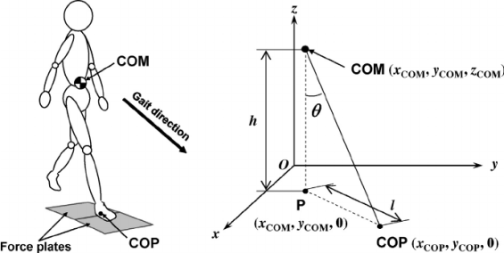 Fig-3-Coordinates-of-COM-COP-and-projection-of-COM-on-the-floor-u-COM-COP-angle-l