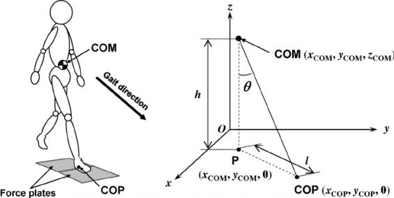 Fig-3-Coordinates-of-COM-COP-and-projection-of-COM-on-the-floor-u-COM-COP-angle-l